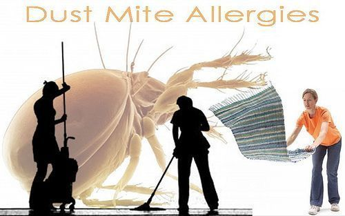 Immunotherapy Tablets For Dust Mite Allergy May Reduce