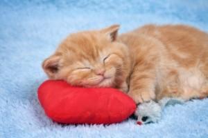 MRP_Sleeping cat